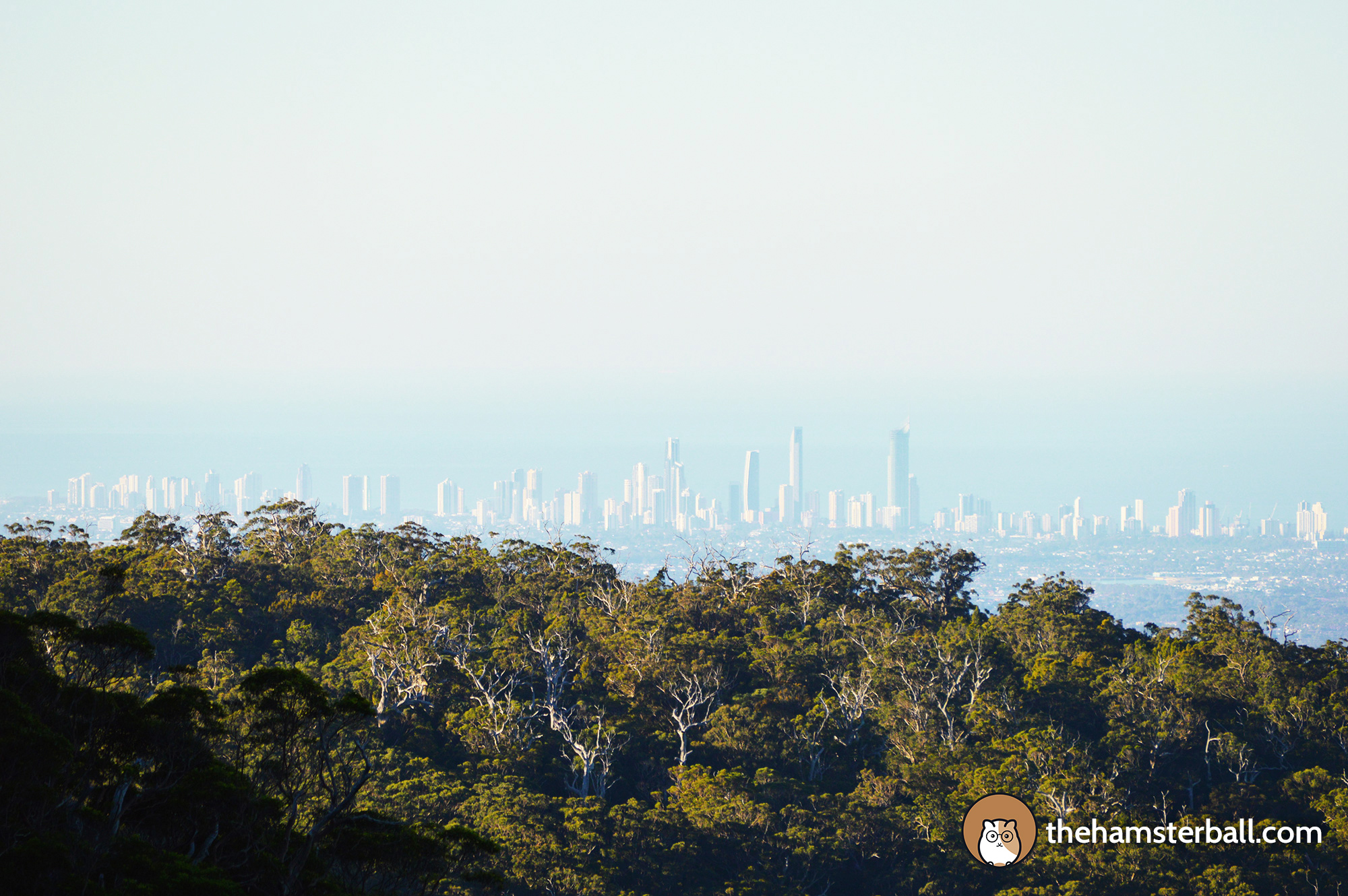 Warrie Circuit, Springbrook, Forest,Gold Coast Skyline