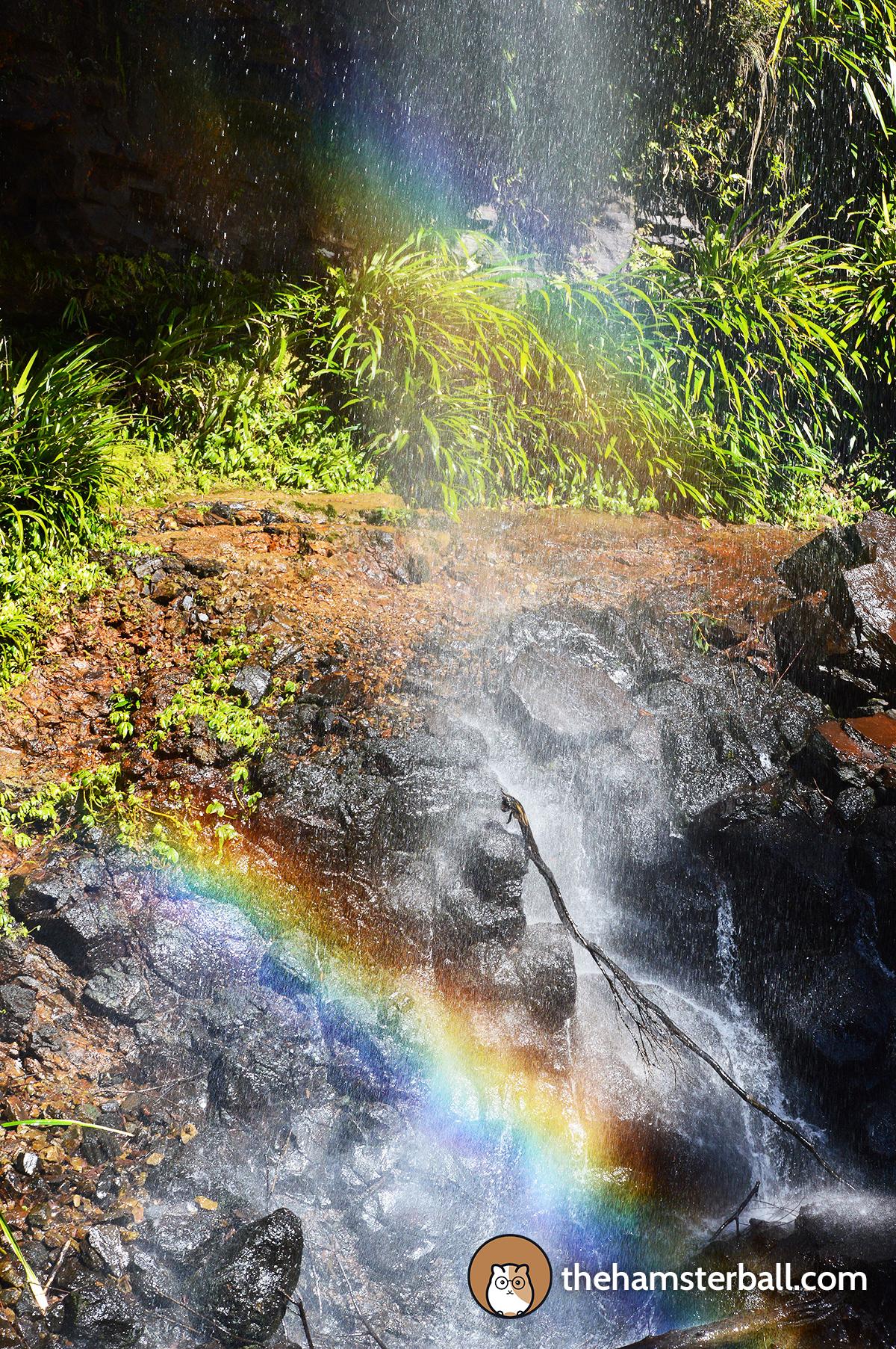 Warrie Circuit, Springbrook, Twin Falls, Rainbow