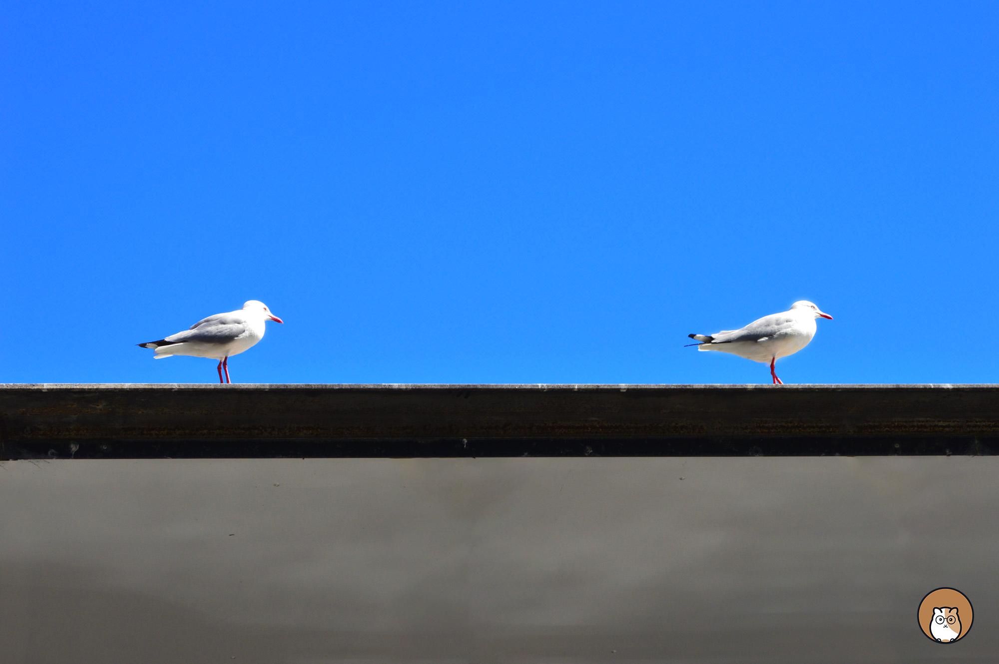 seagull, inspiration
